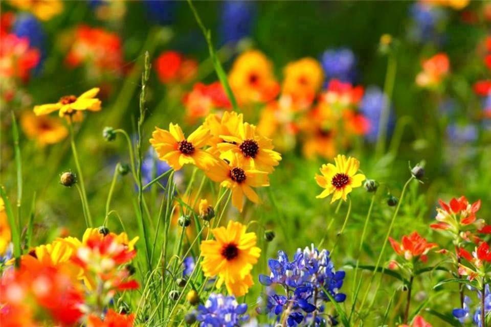 poésie des fleurs ...et des mots ....