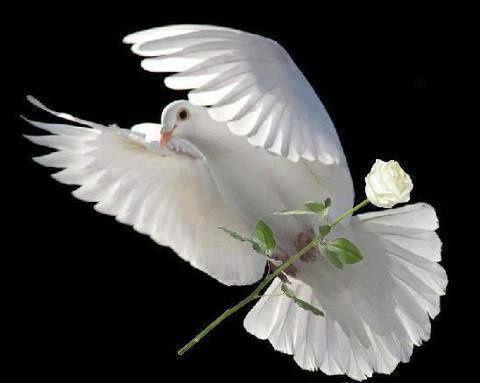 Une Rose blanche en hommage