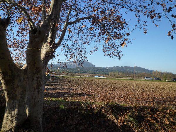 Photo du Pic en hiver vue du Triadou