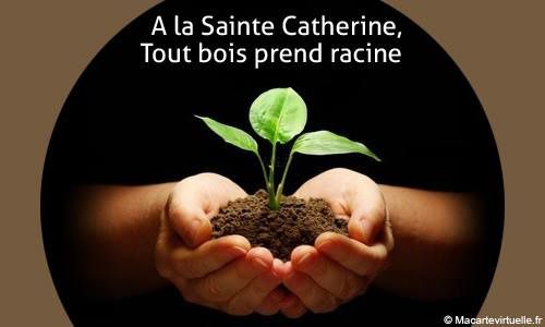 Pour Sainte Catherine ?....