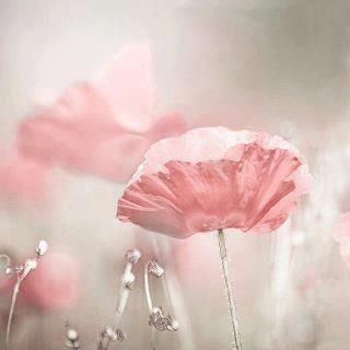 La fleur l'oiseau : Le printemps