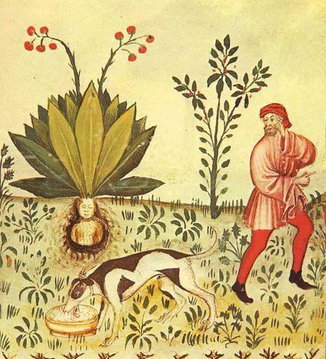 Pierre Magnol  le magnolia et  l'Édit de Nantes