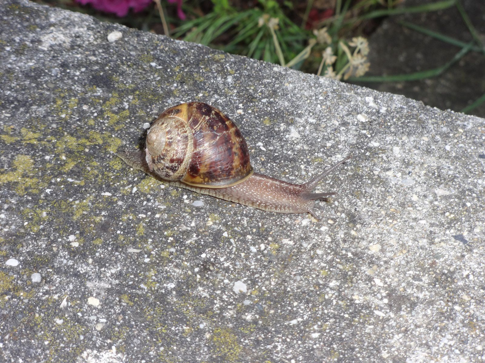 24 heures photo : Ouh, l'escargot...