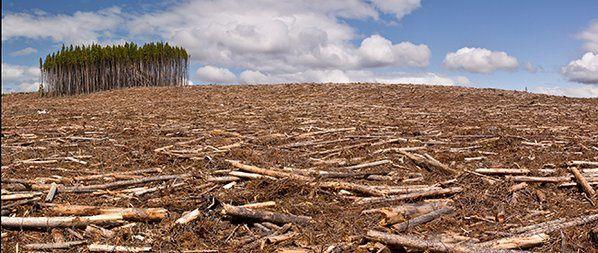 Mardi 1er décembre 2015, la déforestation thème du jour à Paris lors sde la COP21