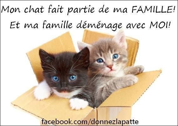 ANNONCE DU 18/02/2015 - FIGARO chat 8 mois