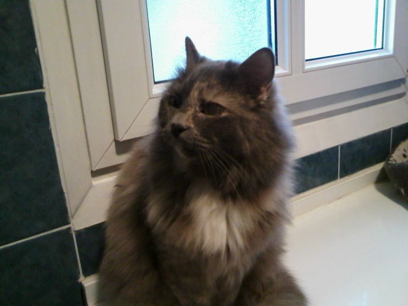 ANNONCE DU 10/03/2015 - CHAMALLOW chatte 1 an