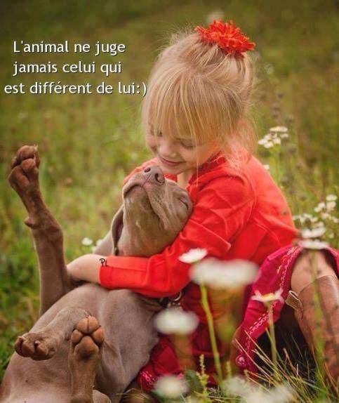 ANNONCE DU 14/03/2015 - ELYSEE chat 2 ans