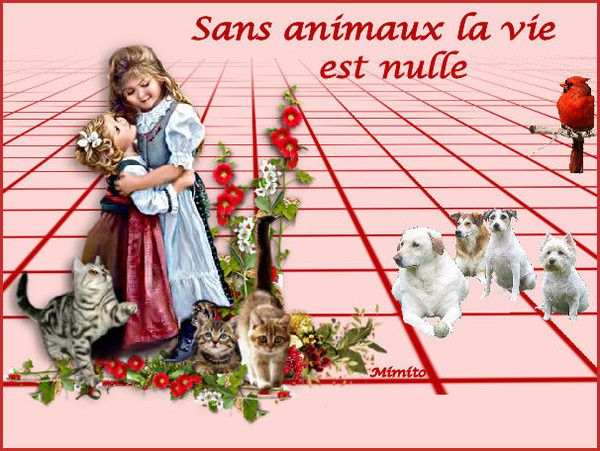 ADOPTION CHAT - ANNONCE 29/03 - MOOGLIE 4 ans, M