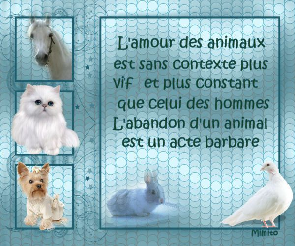 ADOPTION CHAT - ANNONCE 04/04 - LILICAT 1 an 1/2, F