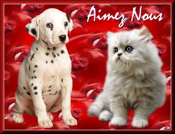ADOPTION CHAT - ANNONCE 09/04 - JUDY 9 mois, F