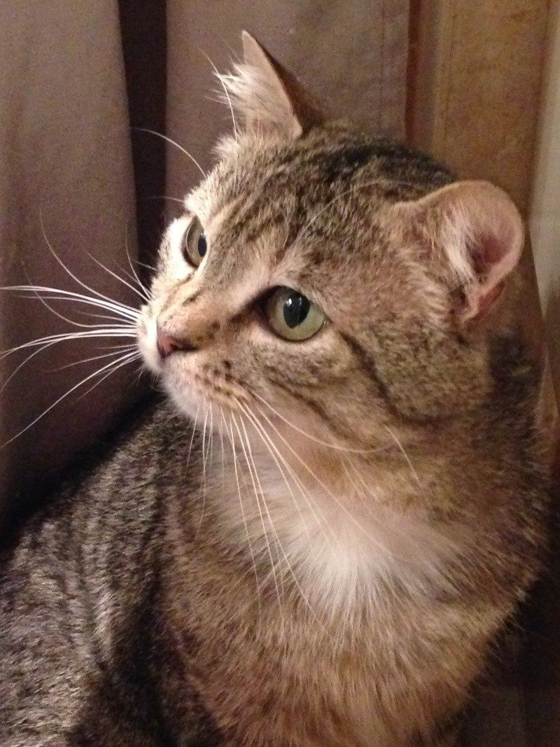 ADOPTION CHAT - ANNONCE 12/04 - GREGOR, 3 ans, M