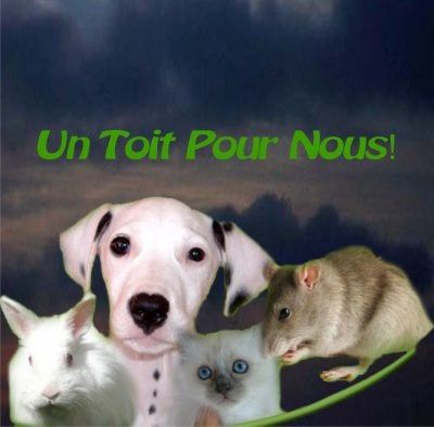 ADOPTION CHAT - ANNONCE 15/04 - HARLETTE, 1 an 1/2, F