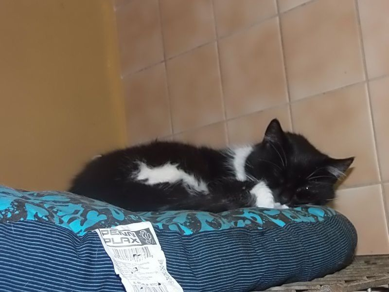 ADOPTION CHAT - ANNONCE 16/04 - LUSTUCRU, 6 ans, M