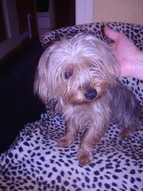 ADOPTION CHIEN - ANNONCE 26/04 - LORD, 1 an, M