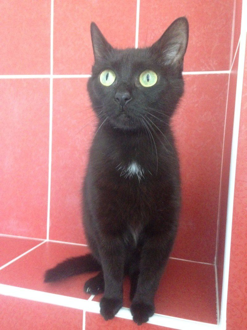 ADOPTION CHAT - ATHINA, 3 ANS, F