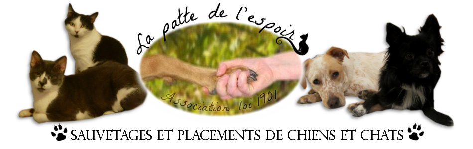 ADOPTION CHATON - LOV 4 mois - M