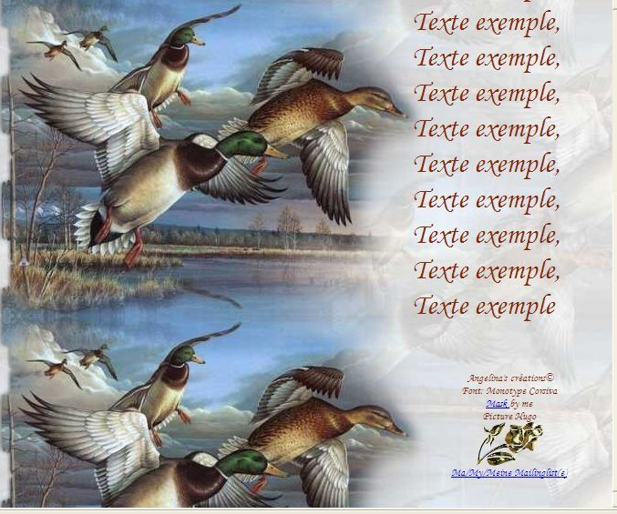 Canards Colvert Incredimail &amp&#x3B; Papier A4 h l &amp&#x3B; outlook &amp&#x3B; enveloppe &amp&#x3B; 2 cartes A5 &amp&#x3B; signets canards_colvert_b8763e7c_hugo