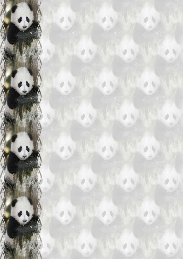 Panda IM &amp&#x3B; outl &amp&#x3B; Papier A4 haut et large &amp&#x3B; enveloppe &amp&#x3B; 2 cartes A5 &amp&#x3B; signets 3 langues  an_panda_zhen6