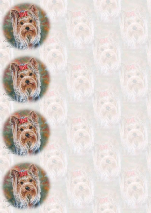 Yorkie avec mèche Incredimail &amp&#x3B; Papier A4 h l &amp&#x3B; outlook &amp&#x3B; enveloppe &amp&#x3B; 2 cartes A5 &amp&#x3B; signets 3 langues     yorkie_with_mottled