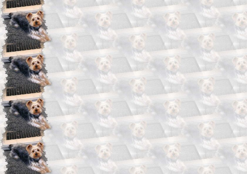 Chien York Incredimail &amp&#x3B; outlook &amp&#x3B; Papier A4 h l &amp&#x3B; enveloppe &amp&#x3B; 2 cartes A5 &amp&#x3B; signets 3 langues   chien_york_filou_img022_00