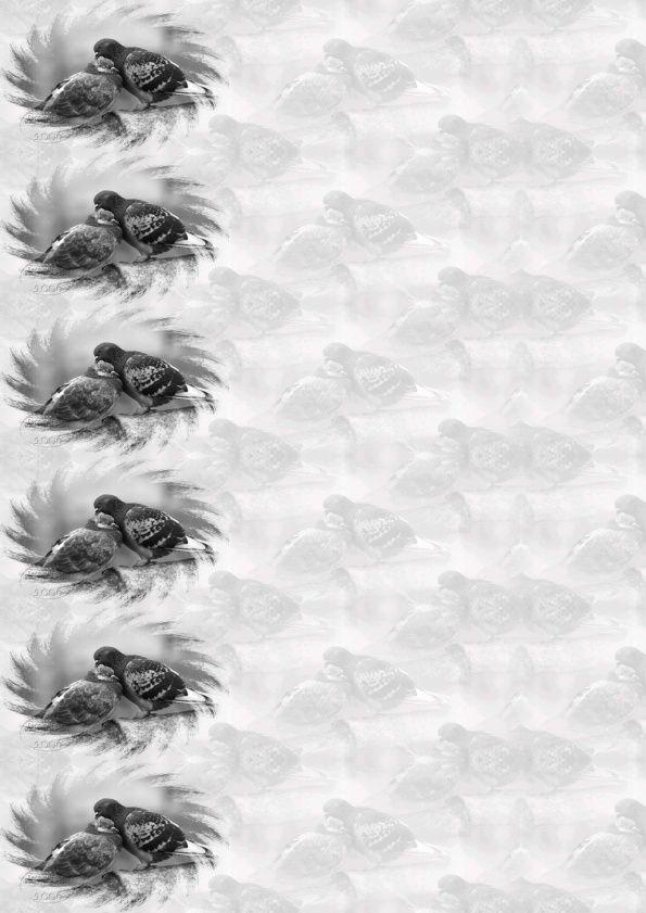 Pigeons Incredimail &amp&#x3B; Papier A4 h l &amp&#x3B; outlook &amp&#x3B; enveloppe &amp&#x3B; 2 cartes A5 &amp&#x3B; signets 3 langues    pigeons10