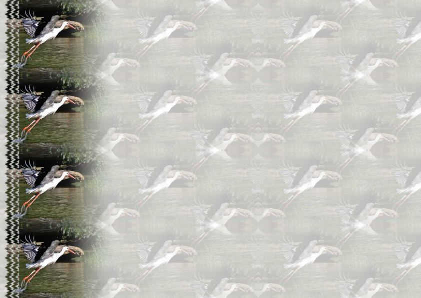 Cigogne Incredimail &amp&#x3B; Papier A4 h l &amp&#x3B; outlook &amp&#x3B; enveloppe &amp&#x3B; 2 cartes A5 &amp&#x3B; signets 3 langues    ois_cigogne_090529120341_86_00