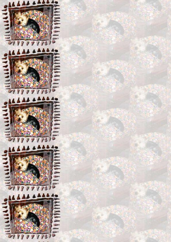 Chien York Incredimail &amp&#x3B; outlook &amp&#x3B; Papier A4 h l &amp&#x3B; enveloppe &amp&#x3B; 2 cartes A5 &amp&#x3B; signets 3 langues  chien_york_8_janvier_2000_s_marie_claude00