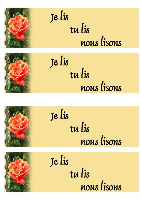Rose orange fond orange Incredimail &amp&#x3B; Papier A4 h l &amp&#x3B; outlook &amp&#x3B; enveloppe &amp&#x3B; 2 cartes A5 &amp&#x3B; signets 3 langues rose_orange_daisy_gedc1318_00_fonduni_orange
