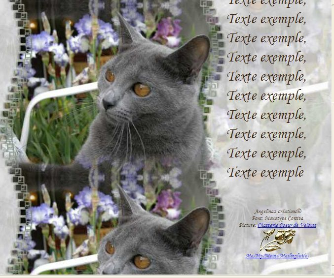 Chartreux (Maman Sacha) Incredimail &amp&#x3B; Papier A4 h l &amp&#x3B; outlook &amp&#x3B; enveloppe &amp&#x3B; 2 cartes A5 &amp&#x3B; signets 3 langues  chat_chartreux_coeurdevelours_paeonia_dscn7494