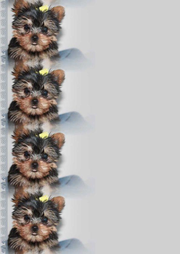 Chien Yorkie Incredimail &amp&#x3B; Papier A4 h l &amp&#x3B; outlook &amp&#x3B; enveloppe &amp&#x3B; 2 cartes A5 &amp&#x3B; signets 3 langues   chien_mitzu_albert_line_mitzu4_00