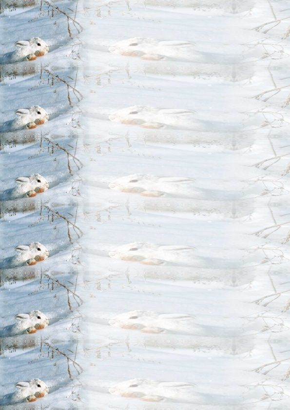 Lapin blanc dans neige Incredimail &amp&#x3B; outlook &amp&#x3B; Papier A4 h l &amp&#x3B; enveloppe &amp&#x3B; 2 cartes A5 &amp&#x3B; signets 3 langues lapin_blanc_01