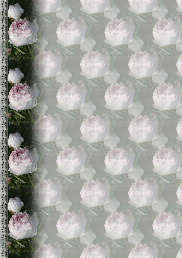 Pivoine de chine rose Incredimail &amp&#x3B; Papier A4 h l &amp&#x3B; outlook &amp&#x3B; enveloppe &amp&#x3B; 2 cartes A5 &amp&#x3B; signets 3 langues    fleur_pivoinedechine_dscn1486_00