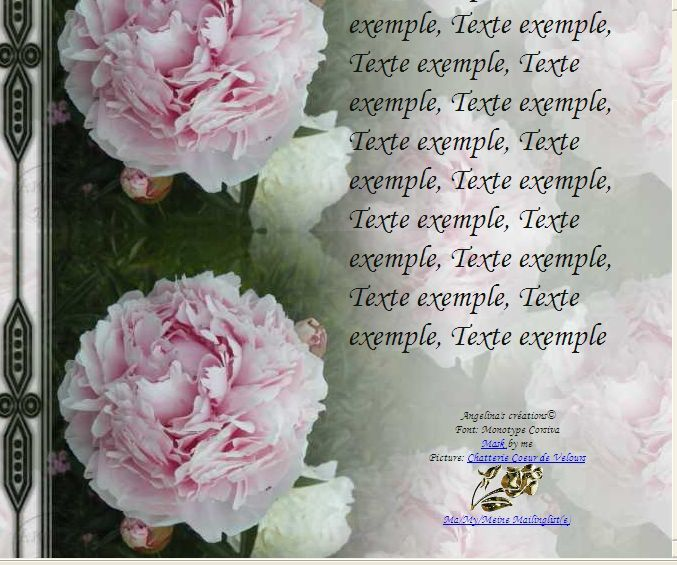 Pivoine de chine Incredimail &amp&#x3B; Papier A4 h l &amp&#x3B; outlook &amp&#x3B; enveloppe &amp&#x3B; 2 cartes A5 &amp&#x3B; signets 3 langues   fleur_pivoinedechine_dscn1875_00