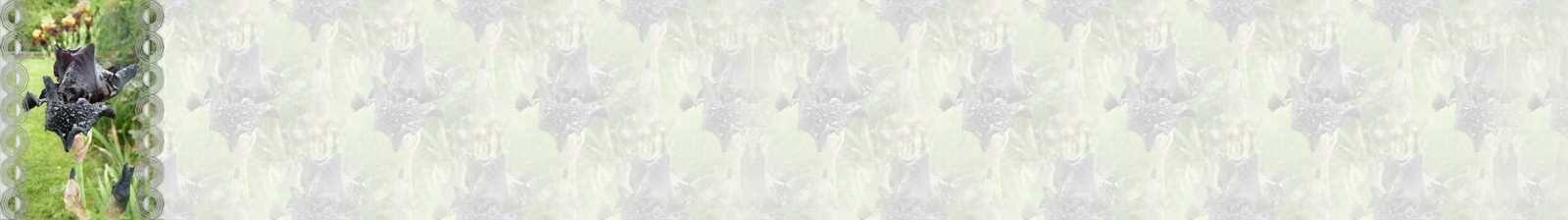 Iris before the storm Incredimail &amp&#x3B; Papier A4 h l &amp&#x3B; outlook &amp&#x3B; enveloppe &amp&#x3B; 2 cartes A5 &amp&#x3B; signets 3 langues   fleur_iris_beforethestorm_dscn1418_00