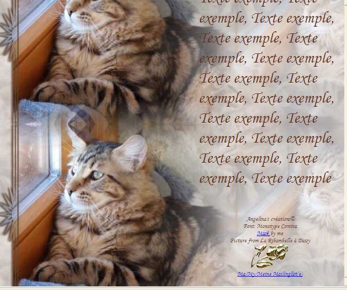 Maine Coon Incredimail &amp&#x3B; Papier A4 h l &amp&#x3B; outlook &amp&#x3B; enveloppe &amp&#x3B; 2 cartes A5 &amp&#x3B; signets 3 langues   chat_mainecoon_ribambelle_gedc0053_00