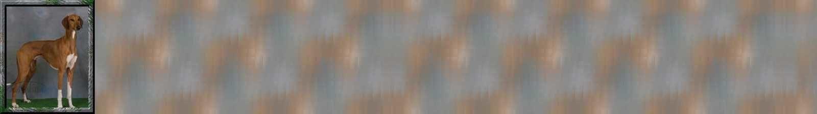 Levrier Incredimail &amp&#x3B; Papier A4 h l &amp&#x3B; outlook &amp&#x3B; enveloppe &amp&#x3B; 2 cartes A5 &amp&#x3B; signets 3 langues chien_210008