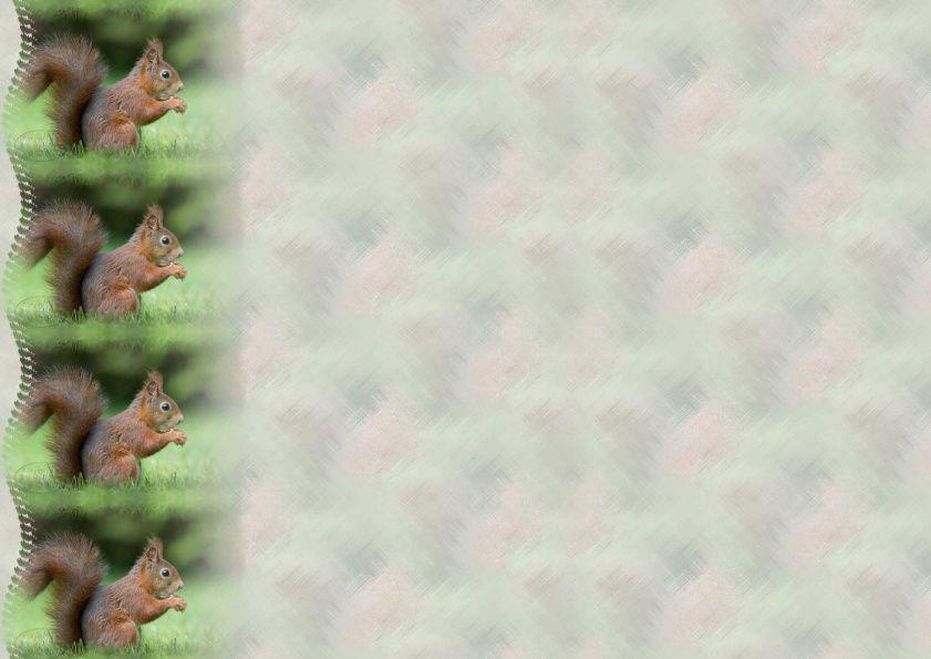 Ecureuil dans l'herbe Incredimail &amp&#x3B; Papier A4 h l &amp&#x3B; outlook &amp&#x3B; enveloppe &amp&#x3B; 2 cartes A5 &amp&#x3B; signets 3 langues   an_sq012