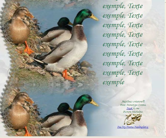 Canards colvert Incredimail &amp&#x3B; outlook &amp&#x3B; Papier A4 h l &amp&#x3B; enveloppe &amp&#x3B; 2 cartes A5 &amp&#x3B; signets 3 langues canards_colvert_008_00