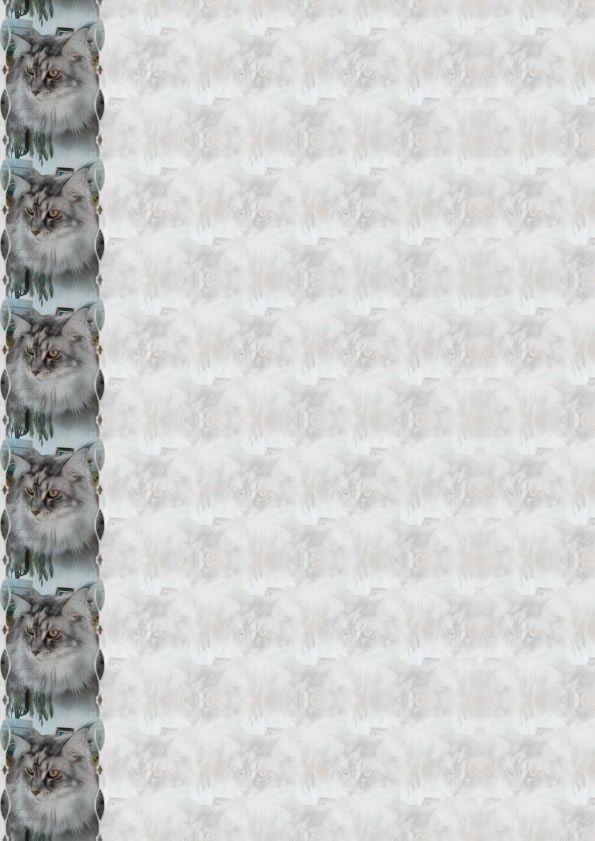 Maine Coon Incredimail &amp&#x3B; Papier A4 h l &amp&#x3B; outlook &amp&#x3B; enveloppe &amp&#x3B; 2 cartes A5 &amp&#x3B; signets 3 langues  chat_mainecoon_moune_photo0007_00
