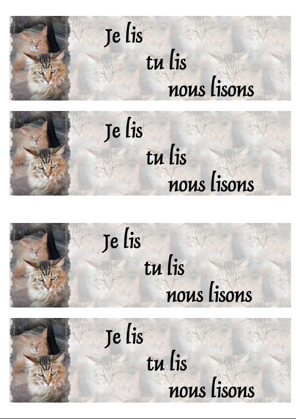 Somali et Maine Coon Incredimail &amp&#x3B; Papier A4 h l &amp&#x3B; outlook &amp&#x3B; enveloppe &amp&#x3B; 2 cartes A5 &amp&#x3B; signets 3 langues chat_somali_mainecoon_daisy_gedc0600_00