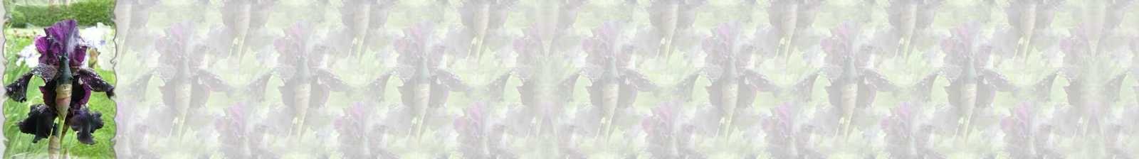 Fleur Iris superstition Incredimail &amp&#x3B; Papier A4 h l &amp&#x3B; outlook &amp&#x3B; enveloppe &amp&#x3B; 2 cartes A5 &amp&#x3B; signets 3 langues  fleur_iris_Superstition_dscn1410_00