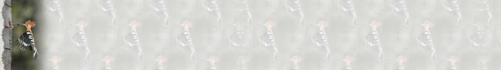 Huppe d'Afrique Oiseaux Incredimail &amp&#x3B; A4 h l &amp&#x3B; outlook &amp&#x3B; enveloppe &amp&#x3B; 2 cartes A5 &amp&#x3B; signets 3 langues   ois_huppe_d_afrique_micheline_00