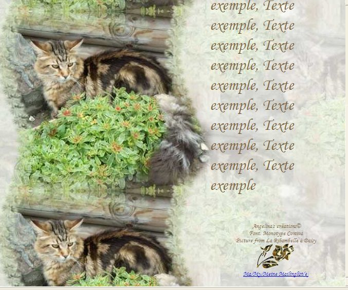 Maine Coon Incredimail &amp&#x3B; Papier A4 h l &amp&#x3B; outlook &amp&#x3B; enveloppe &amp&#x3B; 2 cartes A5 &amp&#x3B; signets 3 langues   chat_mainecoon_daisy_gedc0364_00