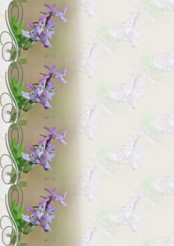 Fleur corydalis cava corydale à bulbe creux Incredimail &amp&#x3B; A4 h l &amp&#x3B; outlook &amp&#x3B; enveloppe &amp&#x3B; 2 cartes A5 &amp&#x3B; signets 3 langues    fleur_corydalis_cava_corydale_a_bulbe_creux_00_laurent
