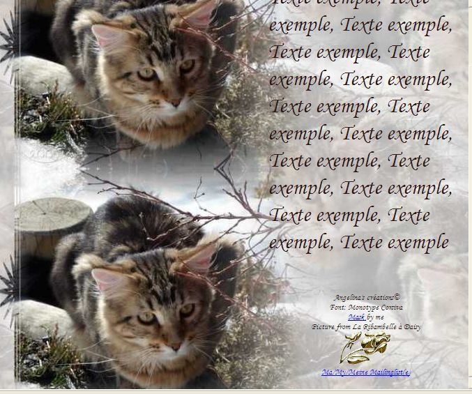 Maine Coon Incredimail &amp&#x3B; Papier A4 h l &amp&#x3B; outlook &amp&#x3B; enveloppe &amp&#x3B; 2 cartes A5 &amp&#x3B; signets 3 langues  chat_mainecoon_daisy_gedc0079_00