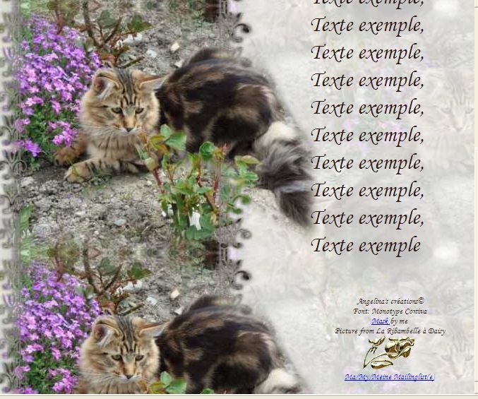 Maine Coon Incredimail &amp&#x3B; Papier A4 h l &amp&#x3B; outlook &amp&#x3B; enveloppe &amp&#x3B; 2 cartes A5 &amp&#x3B; signets 3 langues    chat_mainecoon_daisy_gedc0299_00