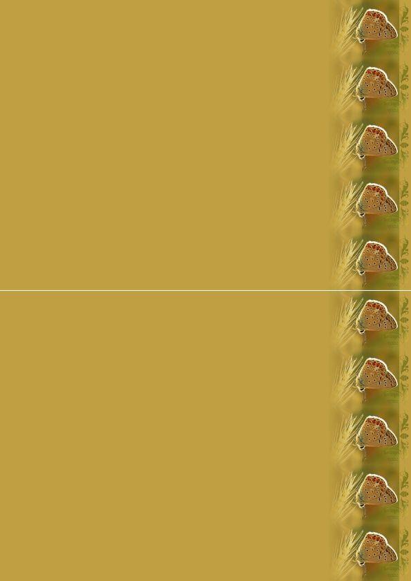 Papillon Incredimail &amp&#x3B; Papier A4 h l &amp&#x3B; outlook &amp&#x3B; enveloppe &amp&#x3B; 2 cartes A5 &amp&#x3B; signets 3 langues    pap_image0112