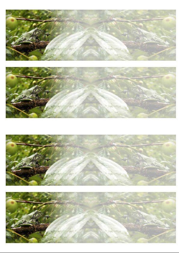 Grenouilles d'arbres Incredimail &amp&#x3B; Papier A4 h l &amp&#x3B; outlook &amp&#x3B; enveloppe &amp&#x3B; 2 cartes A5 &amp&#x3B; signets 3 langues      tree_frog_24