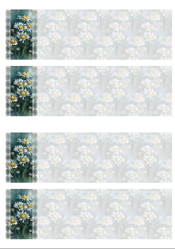 Marguerites Daisies Incredimail &amp&#x3B; Papier A4 h l &amp&#x3B; outlook &amp&#x3B; enveloppe &amp&#x3B; 2 cartes A5 &amp&#x3B; signets 3 langues     fleurs_se24e8342