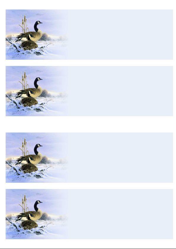 Oiseaux paysage hivernal Incredimail &amp&#x3B; Papier A4 h l &amp&#x3B; outlook &amp&#x3B; enveloppe &amp&#x3B; 2 cartes A5 &amp&#x3B; signets 3 langues    ois_companions_jpg